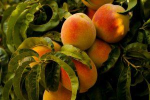 Farmers-market-provo-peaches
